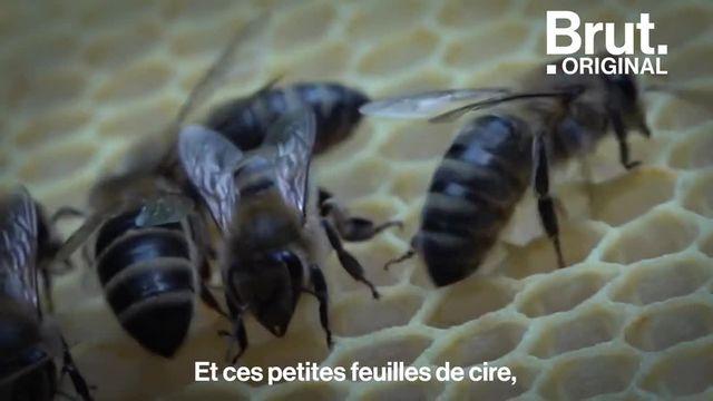 Nourrice, gardienne, butineuse... Dans sa courte vie, une abeille passe par 8 métiers successifs et se transforme à chaque fois pour mieux réaliser ses tâches. Apiculteur, Julien retrace cette vie bien organisée.