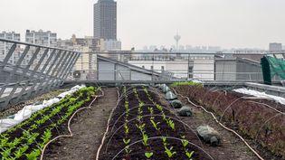 L'agriculture urbaine est en plein essor en France. Ici, sur le toit d'un centre commercial à Aubervilliers (Seine-Saint-Denis), en novembre 2016. (Photo d'illustration) (BRUNO LEVESQUE / MAXPPP)