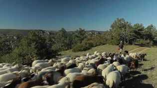 Larzac : les éleveurs défendent une agriculture militante (FRANCE 2)