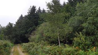 Cette parcelle de six hectares de Douglas, à Bersac-sur-Rivalier, en Haute-Vienne, a été vendue au printemps 2021, pour 141 500 euros. (RAPHAËL EBENSTEIN / RADIO FRANCE)