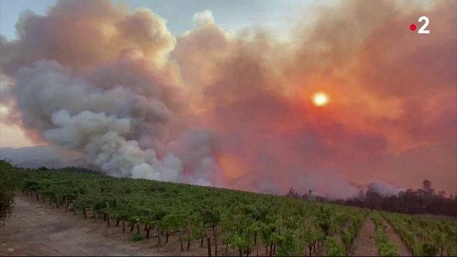 Californie : la vallée du vin ravagée par les flemmes