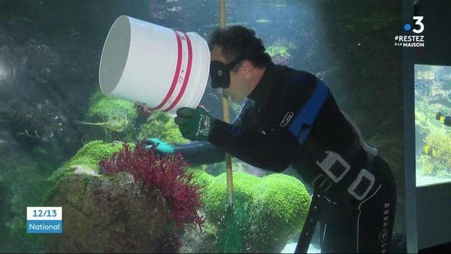 La Rochelle : les employés de l'aquarium inquiets pour l'avenir
