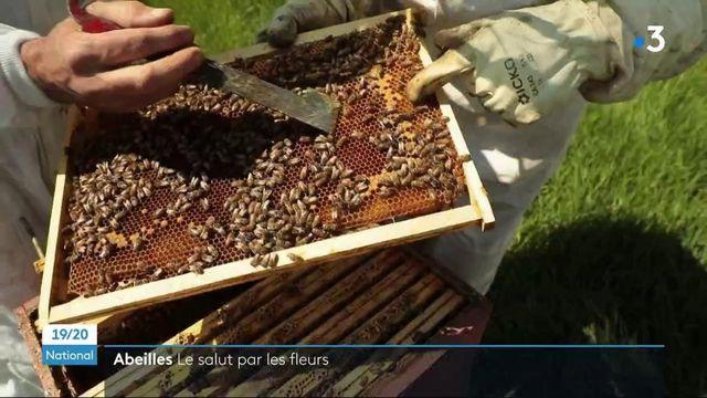 Environnement : les abeilles souffrent de carences alimentaires