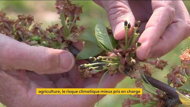 Agriculture : des mesures annoncées pour faire face aux événements climatiques