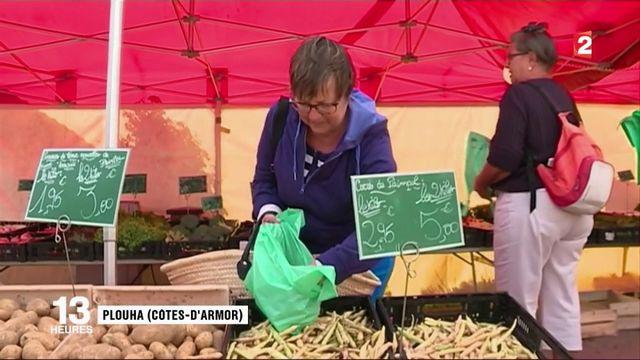Côtes-d'Armor : une très bonne saison pour le coco de Paimpol