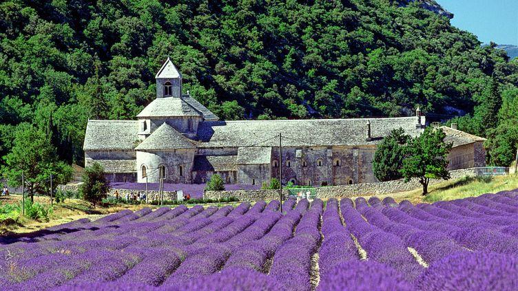L'abbaye Notre-Dame-de-Sénanque à Gordes dans le Vaucluse (JEAN-MARC LALLEMAND / MAXPPP)