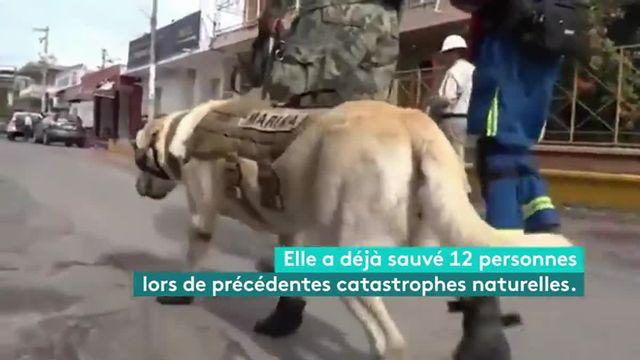 VIDEO. Frida chien sauveteur au Mexique