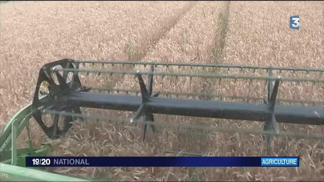 Céréales : mauvaises moissons dans la Beauce