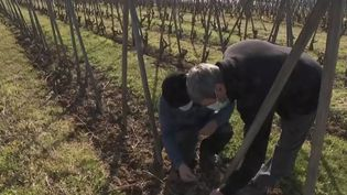 Viticulture : le gel ravage les vignobles. (FRANCE 2)