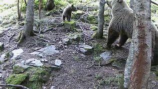 Le maire d'Ustou, en Ariège, a décidé d'interdire les randonnées en raison de la présence de quatre ours dans le secteur. Un troupeau de 800 brebis a été la cible d'attaques ces dernières heures. (France 2)