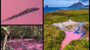 Plusieurs photographes passionnés ont immortalisé ce phénomène de mangrove rose.Un phénomène qui vient de se reproduire en mai 2021. (MARTINIQUE LA 1ERE /MANUELA MARIE-LOUISE / ERIC CHARPENTIER-TITY / GERARD GRADUEL DE PASSIFOTO)