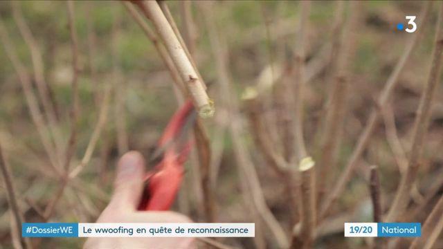 Le wwoofing : une méthode pour se former à la permaculture