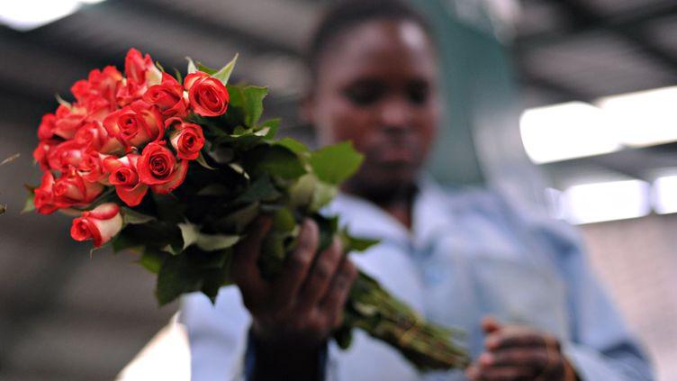 Une employée kényane d'une ferme du Naivasha confectionne un bouquet de roses destiné à être exporté en Europe, le 19 avril 2010. (ROBERTO SCHMIDT / AFP)