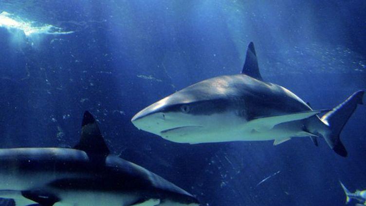Un requin arrache le pied d'un touriste en Australie