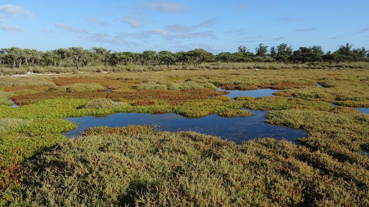 Mangrove sur l'île Europe, des îles Eparses (SOPHIE LAUTIER / AFP)