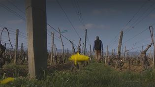 vins (FRANCEINFO)