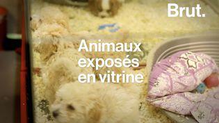VIDEO. Loi sur la maltraitance animale : ce qu'elle contient (BRUT)