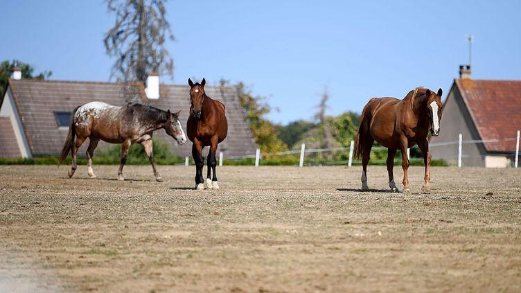 Des chevaux du ranch de l'Espoir, à Villefranche-Saint-Phal (Yonne), le 21 septembre 2020. (MAXPPP)