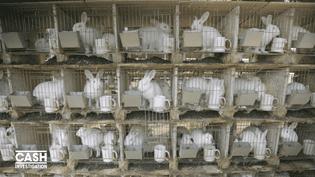 Capture d'écran montrant les élevages de lapins en Chine. (CASH INVESTIGATION / FRANCE 2)