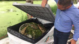 Plus de quatre tonnes de poissons morts ont été retirés de la rivière Seiche. (FRANCE BLEU ARMORIQUE)