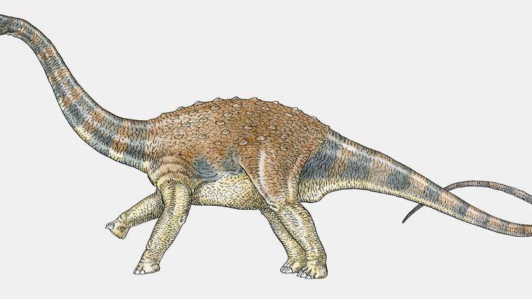 Le fémur d'un titanosaure, un d'herbivore géant, a été retrouvé sur un site paléontologique de l'Hérault. (JOHN TEMPERTON / GETTY IMAGES)