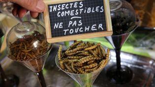 Des insectes destinés à la consommation alimentaire, à Thionville, en avril 2015. (PHOTO JULIO PELAEZ / MAXPPP)