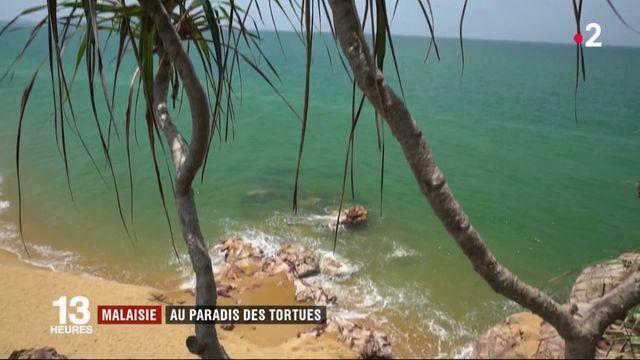 Malaisie : un sanctuaire pour tortues