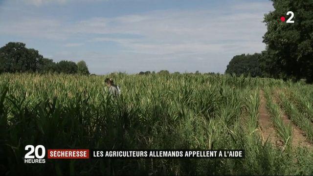 Sécheresse : Les agriculteurs allemands appellent à l'aide