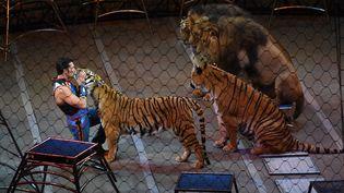 Un dresseur avec des lions et des tigres lors d'un numéro de cirque, le 21 mai 2017. (TIMOTHY A. CLARY / AFP)