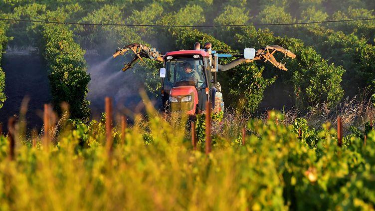 Un épandage de produit agrochimique sur une exploitation viticole près de Carcassonne, le 6 août 2020. (GEORGES GOBET / AFP)