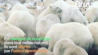 VIDEO. 4 conséquences inattendues du réchauffement de l'Arctique (BRUT)