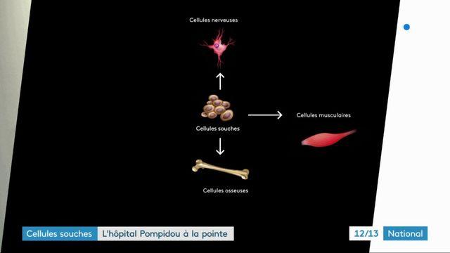 Santé : comment peuvent être utilisées nos cellules souches ?