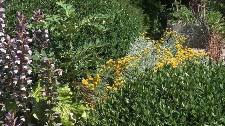 Avec le confinement, des graminées, des plantes, ont pris leurs aises. Considérées comme des mauvaises herbes, elles disparaissent. Alors, comment concilier jardin et ville ? (FRANCE 3)
