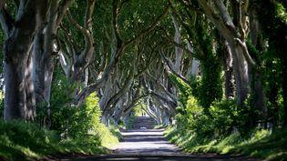 """Cette route du comté d'Antrim, en Irlande du Nord, photographiée le 16 juin 2014, apparaît dans la série """"Game of Thrones"""". (PETER MORRISON / AP / SIPA)"""