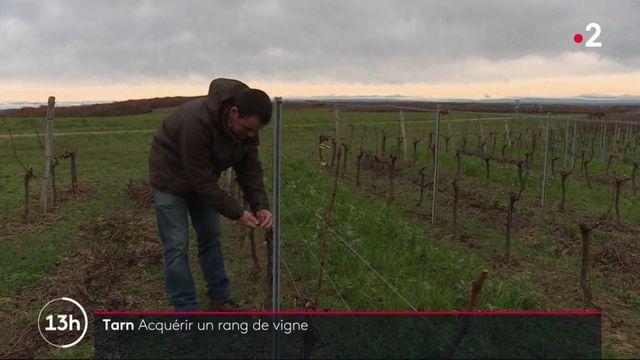 Tarn : à Gaillac, un financement participatif pour sauver le vignoble