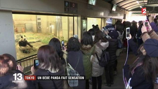 Tokyo : un bébé panda fait sensation