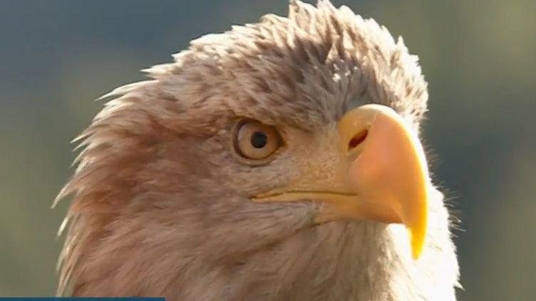 Un aigle survole les Alpes pour alerter sur le réchauffement climatique. Muni d'une petite caméra sur le dos, on embarque au-dessus des Alpes. Des images éblouissantes. (France 3)