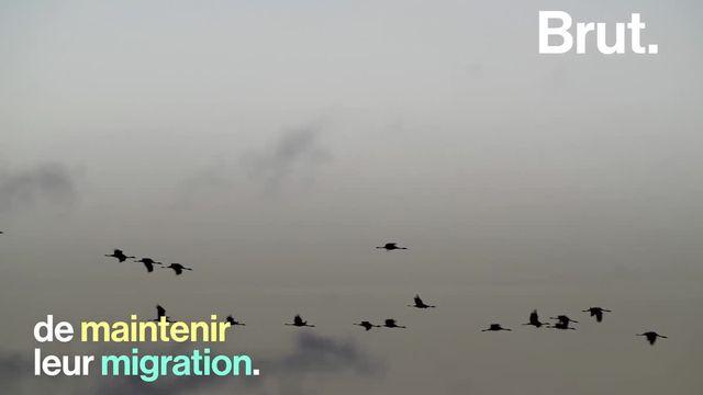Des oiseaux qui rapetissent. C'est l'une des conséquences inattendues du réchauffement climatique…