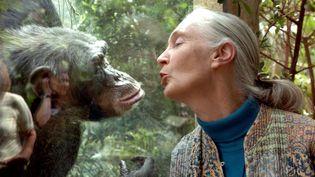 Jane Goodall, la plus grande primatologue,éthologue et anthropologue britannique,autorité mondiale sur les chimpanzés. Ici, en pleine communication avec Nana, le 6 juin 2004 au zoo de Magdeburg en Allemagne. Véritable pionnière en matière d'études avec ces animaux en Tanzanie depuis plus de 40 ans. (JENS SCHLUETER / DDP IMAGES VIA AFP)