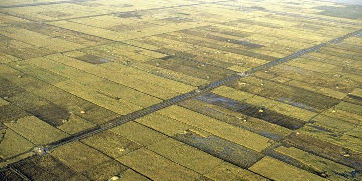 Terres irriguées à Tombouctou sur le fleuve Niger, au Mali. (Photo AFP)