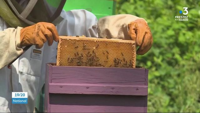 Les abeilles, grandes gagnantes du confinement