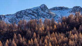 Au dessus d'arbres roux, premières neiges également, dimanche 22 novembre, dans les Alpes de Haute-Provence, dans le Val d'Allos, près du Lac d'Allos à 2200 mètres d'altitude. (ROBERT PALOMBA / ONLY FRANCE/AFP)