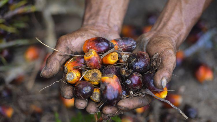 L'huile de palmeest extraite de la pulpe desfruits, de couleur rouge. (CHAIDEER MAHYUDDIN / AFP)