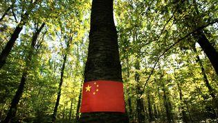 L'appétit croissant de la Chine pour le chêne français, inquiète les professionnels du bois. (MAXPPP)