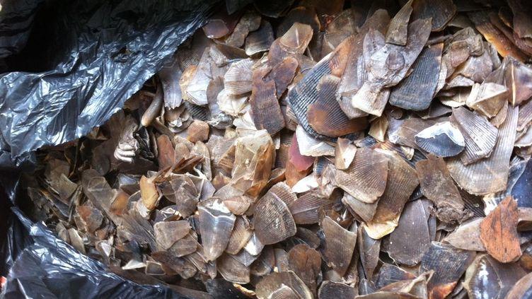 Des écailles de pangolin saisies par les douaniers de Roissy (Val-d'Oise), le 3 mai 2012. (DIRECTION GÉNÉRALE DES DOUANES / FTVI)