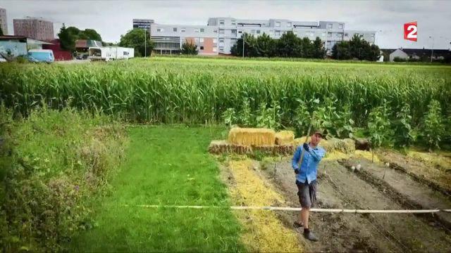 Agriculture : à la découverte de la permaculture