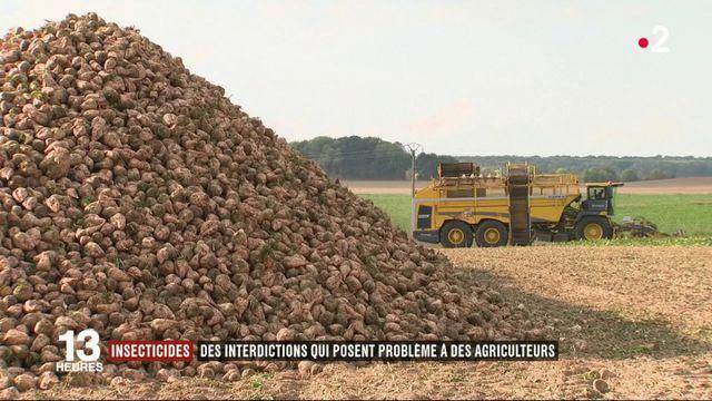 Insecticides : l'interdiction des néonicotinoïdes inquiète les agriculteurs