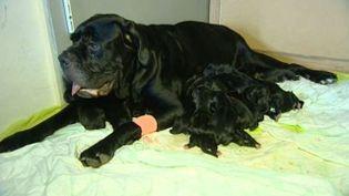 La chienne, Firka, et ses 20 chiots, le 18 octobre 2014. ( FRANCE 3 LANGUEDOC-ROUSSILLON)