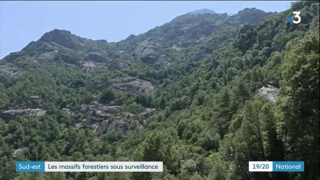 Sud-est : les massifs forestiers sous surveillance