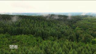 """Pièces à conviction. """"On est passé à une logique agricole"""" : quand la forêt du Morvan fait place à une plantation d'épicéas (PIÈCES A CONVICTION / FRANCE 3)"""
